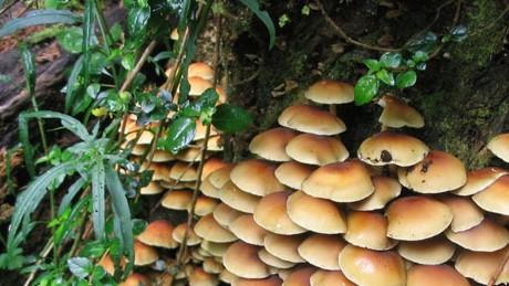 biodiversidad_interior_bosques