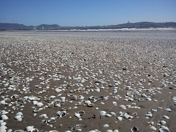 playa región de Coquimbo