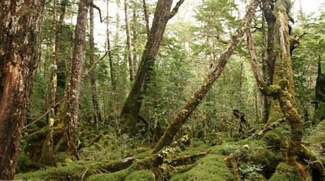 biodiversidad caiquenes