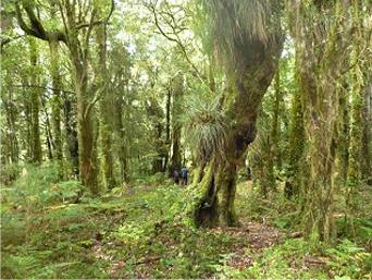 Bosque en Parque Juan Melillanca