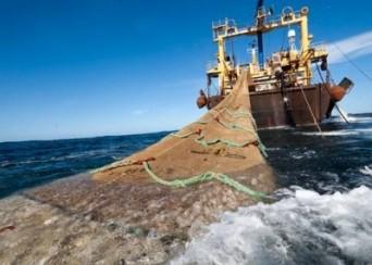 pesca anchoveta