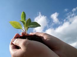 manos y planta